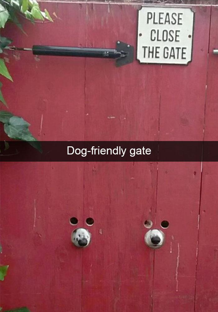 Hilarious-Dog-Snapchats-11